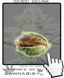 Graine Autoflo cannabis
