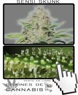 Quand récolter cannabis à autofloraison?